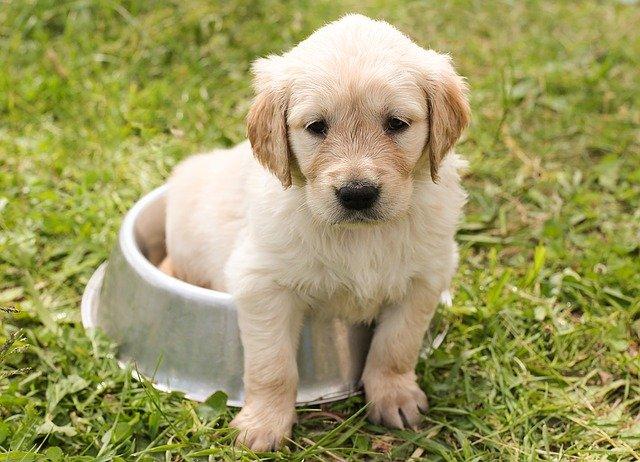 cachorro en comedero de acero